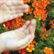 Childrens hands touching set of small orange florets close up — Stock Video