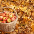 Hand picking up basket with apples — Stock Video