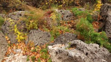 Plants growing among porous stones — Stock Video