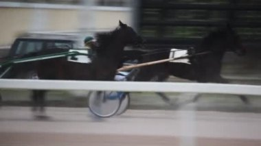 Some equestrians on running horses compete on hippodrome — Stock Video