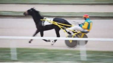 Close up running horse in cart, operated jockey, on hippodrome — Stock Video