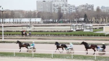 Horsies in teams and with jockeys run on hippodrome against apartment houses — Stock Video