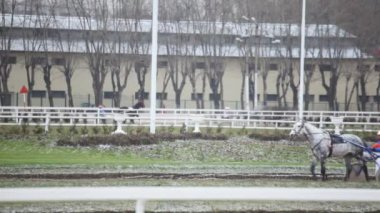 Spotty race horse with cart and jockey goes slowly on hippodrome — Stock Video