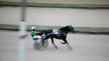 On hippodrome close up jockey sits in vehicle and conducts racer on track — Stock Video