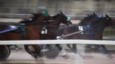 Jockeys in carts harnessed of horses, quickly move on hippodrome path — Stock Video