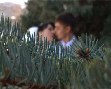 Focusing from branch of firtree to kissing bride and bridegroom — Stock Video