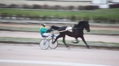 Horse trot racing on Moscow hippodrome — Stock Video