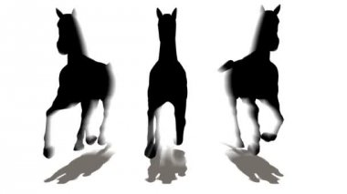 Three horses — Stock Video
