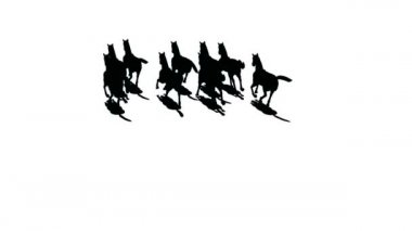 Herd of horses silhouette the top view . — Stok video