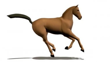 Running horse — Stock Video