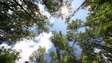 A través de copas de árboles en el cielo. — Vídeo de Stock