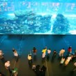 Stock video: Top view on near aquarium inside Dubai Mall in Dubai, UAE.