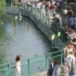 Pond in a zoo, nearby in summer day in Moscow, Russia. — Stock Video