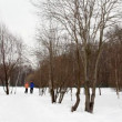 Man and woman run on snow from winter birch forest — Stock Video