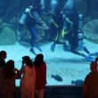 Some near aquarium with divers inside Dubai Mall in Dubai, UAE. — Stock Video