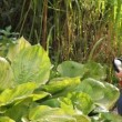 Stok video: Girl discover some plant outdoor with magnifying glass