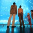 Family is standing at a big aquarium — Stock Video #27546943