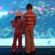 Two children at aquarium speaking with each other — Stock Video