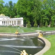 Stock Video: Fountain in park Petergof in summer