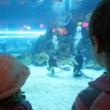 Back view on children standing at aquarium — Stock Video