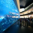 Stock Video: In oceanarium inside Dubai Mall