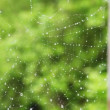 Spiderweb with drops of water waving by wind — Stock Video