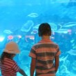 Stock Video: Two children at aquarium speaking with each other