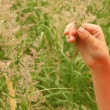 Boy is picking off blades of grass — Stock Video