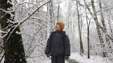 Kid shakes branch of winter tree snow falls down — Stock Video