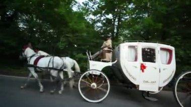 馬のペアは、道路上の御者でキャリッジを描画します。 — ストックビデオ