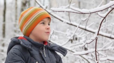 Kid shakes branch of winter tree snow falls down — Stock Video