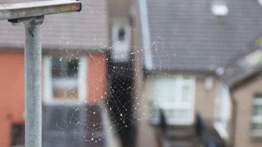 背景に非常に近いショット、アイルランドにクモの巣の家します。 — ストックビデオ