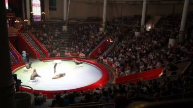 Arena in Moscow Nikulin Circus performance with seals and actor, Moscow, Russia — Stock Video