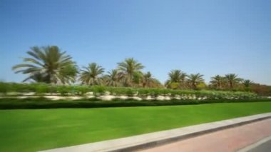View on palms and shrubs from moving car in Oman — Stock Video