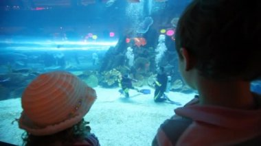 Back view on children standing at aquarium — Stock Video