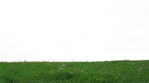 Couple de jeunes mariés se promène sur l'herbe — Vidéo