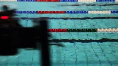 Sportsmen swim butterfly on tracks swimming pool — Stock Video