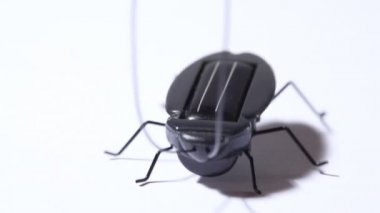 Toy black beetle with solar battery vibrating — Stock Video