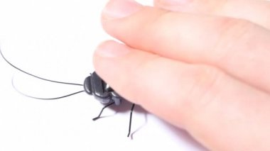 Hand and vibrating toy black beetle with solar battery — Stock Video