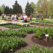 Stock Video: VII Exhibition of flowering bulbs and biennials Spring Symphony