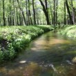 Water stream flowing among green forest — Stock Video