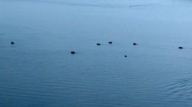 моторная лодка идет около рыбацких лодок на реке волга — Стоковое видео