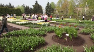 VII Exhibition of flowering bulbs and biennials Spring Symphony — Stock Video