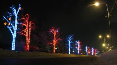 Vehicles pass in front of illuminated trees, time lapse — Stock Video