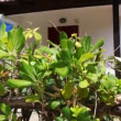 Green bush, then camerrises and seen white hotel with tiled canopies — Stock Video #28797829