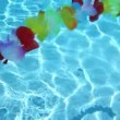 Single line Hawaiian flowers floating in pool water — Stock Video