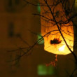 Glowing chinese lantern was hooked for tree at night — Stock Video