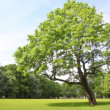 Green tree stands in clearing in city park — Vidéo