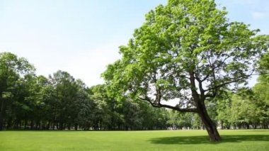 Panorama meadow in city park with green tree — Stock Video