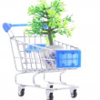 Stock Video: Artificial ornamental plant in flowerpot inside shopping trolley